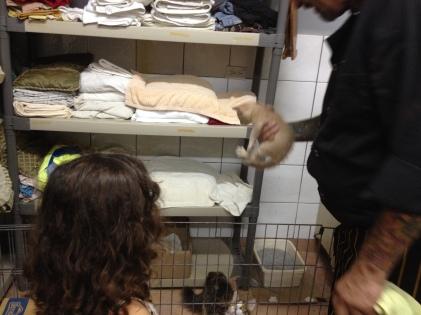 Kittens! Too Cute, Panama Version