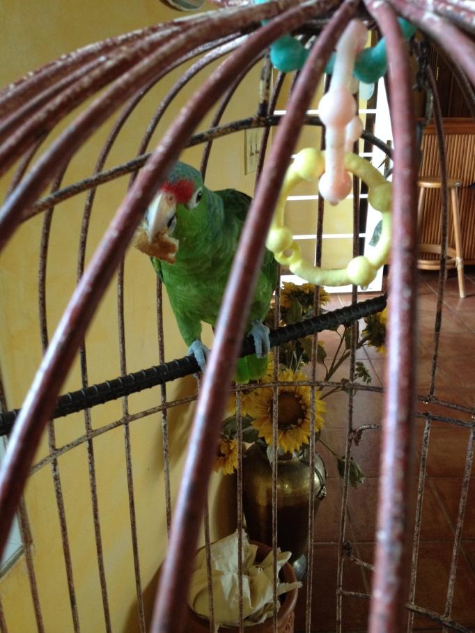 Ricky the Parrot