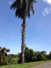 Boca Chica Photos