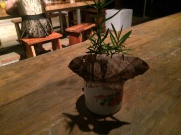 Moth at dinner in Pedasi
