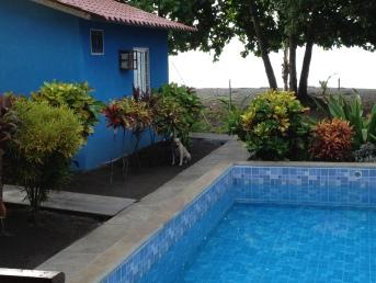The pool and landscaping at Tsunami Inn