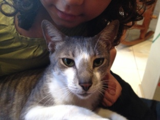 Puma, Resident Gato