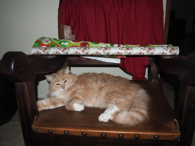 Malo Gato