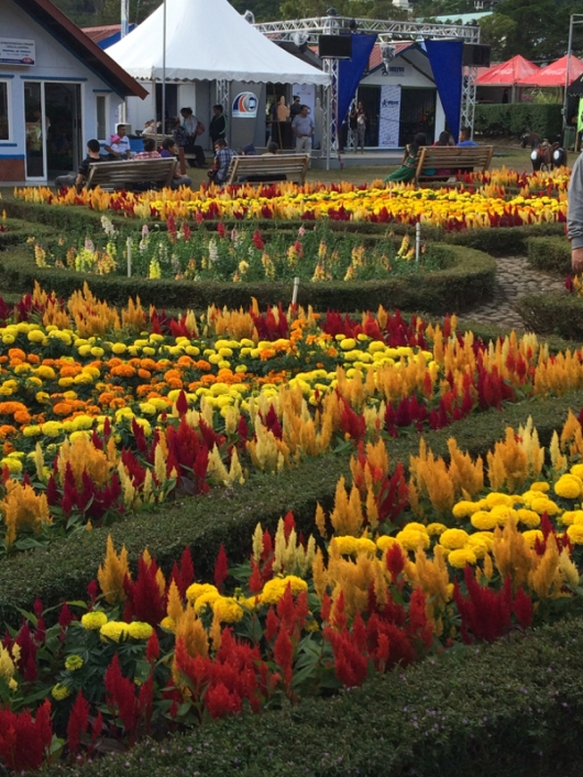 Boquete Flower Festival February 2015