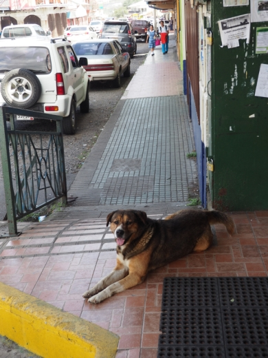 Boquete Dog